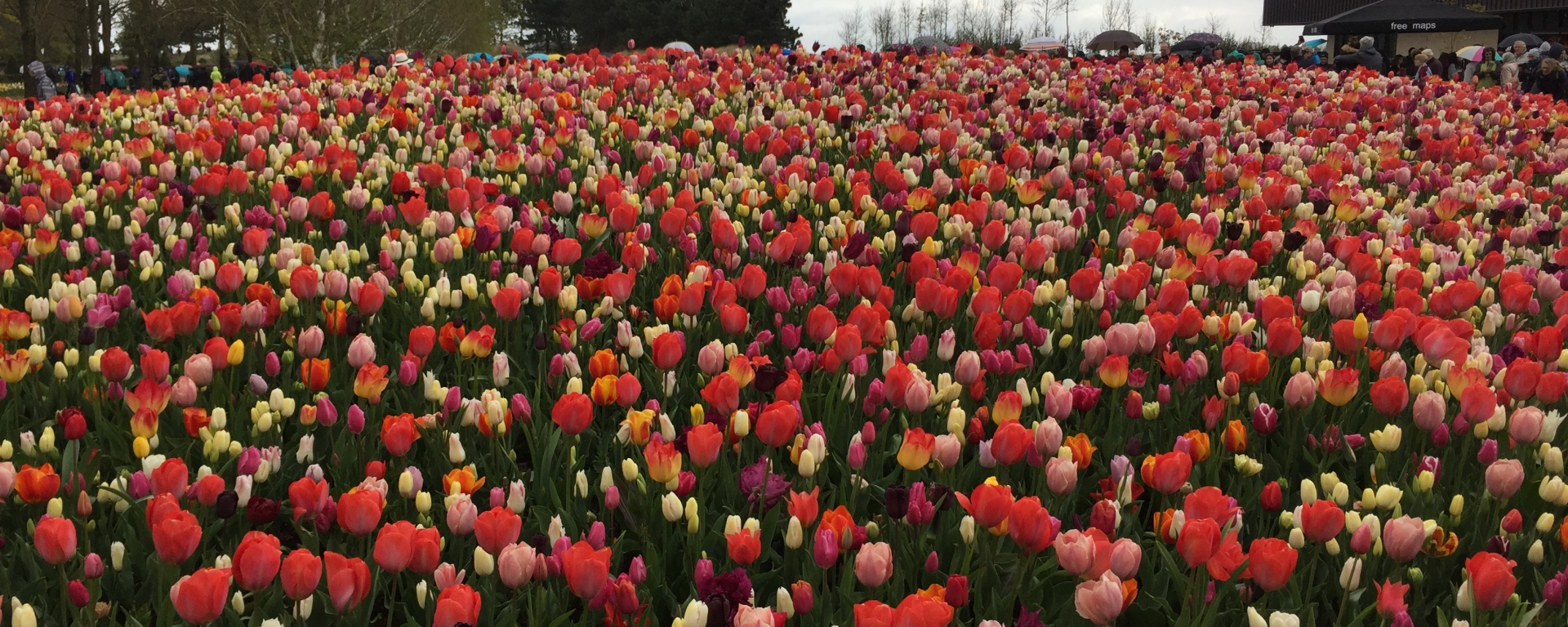 Keukenhof – the most beautiful garden in the world, ours on a Spring ...
